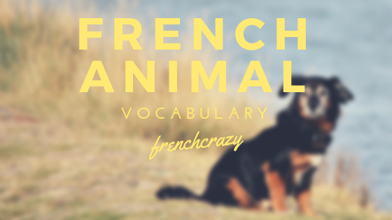 French pet and animal vocabulary